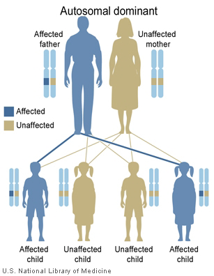 National Library of Medicine (US). Genetics Home Reference [Internet]. Bethesda (MD): The Library; 2013 Sep 16. [Illustration] What are the different ways in which a genetic condition can be inherited? [cited 2015 Jan 5]. Available from: http://ghr.nlm.nih.gov/handbook/illustrations/autodominant