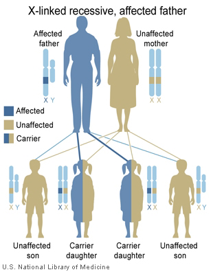 National Library of Medicine (US). Genetics Home Reference [Internet]. Bethesda (MD): The Library; 2013 Sep 16. [Illustration] What are the different ways in which a genetic condition can be inherited? [cited 2015 Jan 5]. Available from: http://ghr.nlm.nih.gov/handbook/illustrations/xlinkrecessivefather